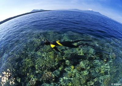 Snorkeling in the Bunaken National Park
