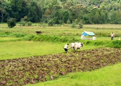 Farmers, North Sulawesi