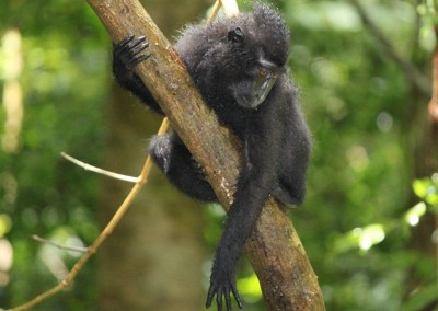 Black Macaque, by Nina Morstol