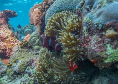 Diving Bunaken, by Matti Salmijarvi