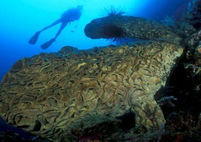 Dive Gorontalo