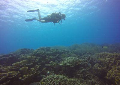 Diver over coral