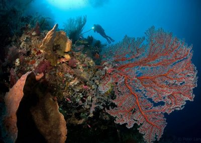 Selayar diving