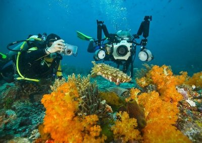 Divers with squid