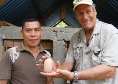 Maleo egg