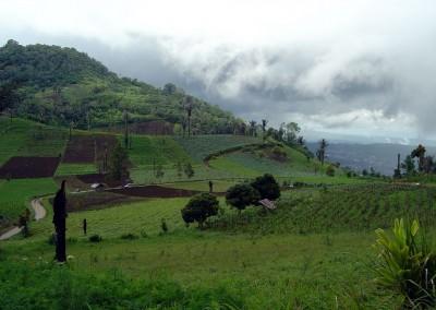 Fields in Rurukan