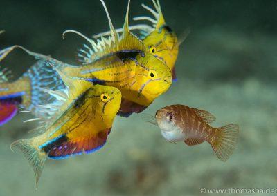 Triton Bay Diving