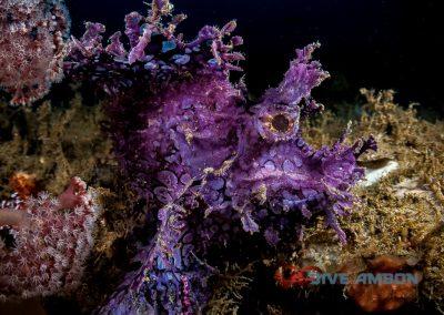 Dive Ambon