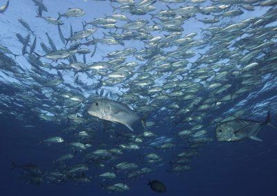Dive with AlamBatu