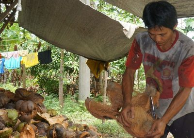 Traditional coconut husk removal