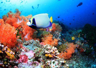 Komodo reef
