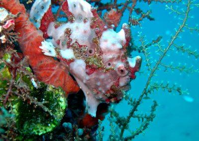 Dive Bunaken