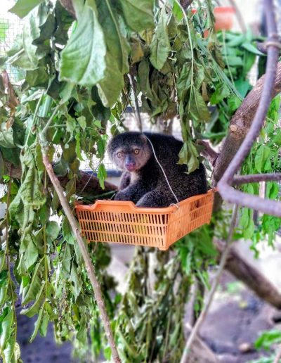 Cuscus just hanging about